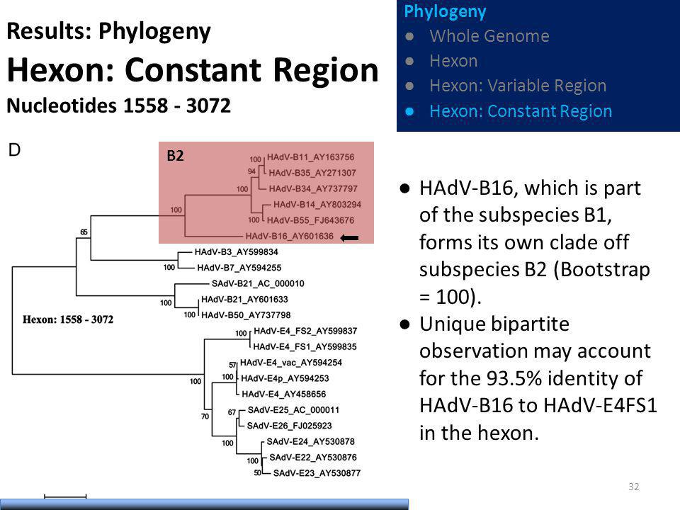 Results: Phylogeny Hexon: Constant Region Nucleotides 1558 - 3072 HAdV-B16, which is part of the subspecies B1, forms its own clade off subspecies B2 (Bootstrap = 100).