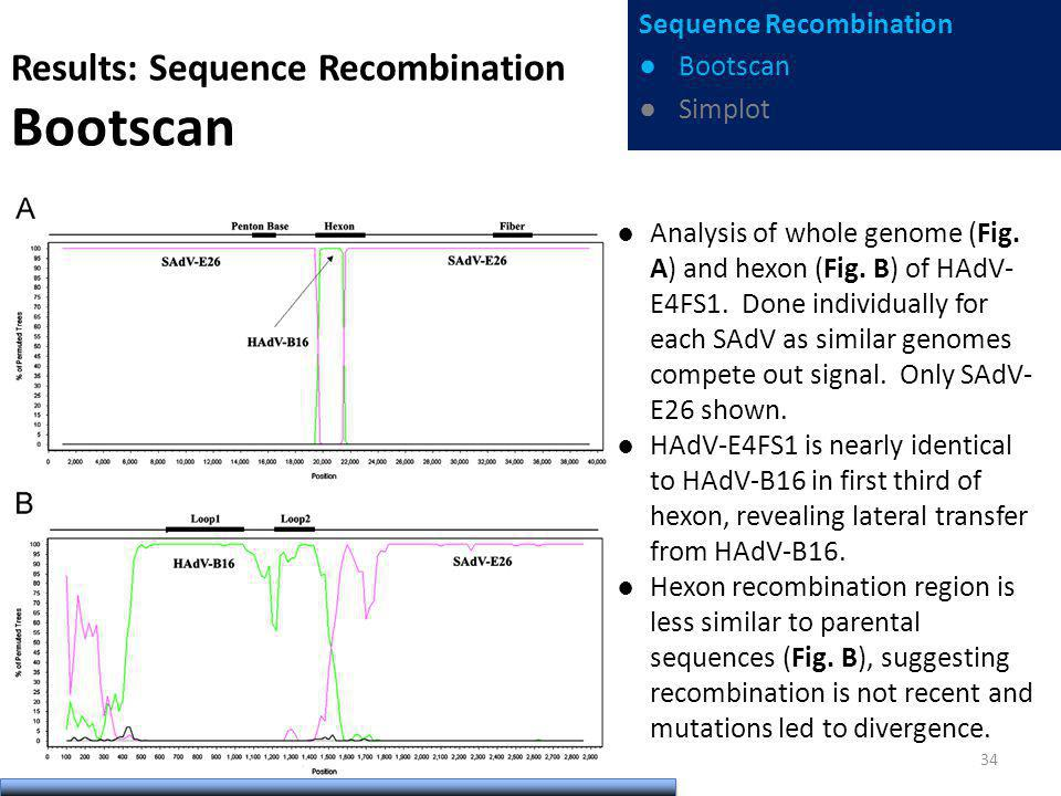 Results: Sequence Recombination Bootscan Analysis of whole genome (Fig. A) and hexon (Fig. B) of HAdV- E4FS1. Done individually for each SAdV as simil