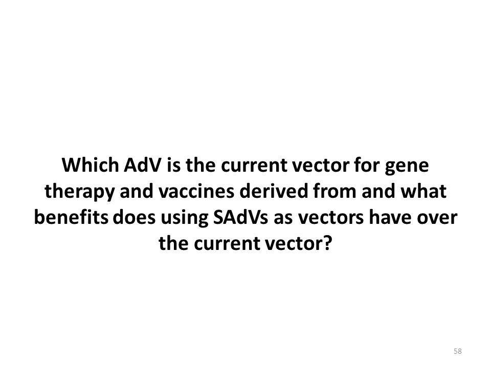 Which AdV is the current vector for gene therapy and vaccines derived from and what benefits does using SAdVs as vectors have over the current vector?