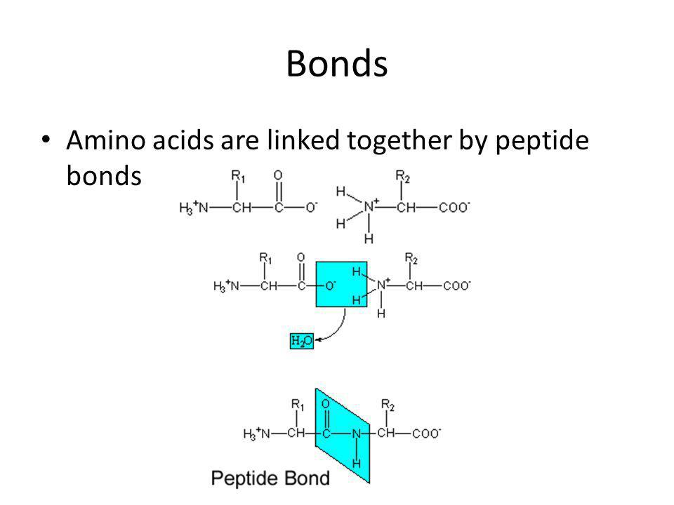 Acidic amino acids Acidic R groups Aspartate (Asp) and glutamic acid or glutamate (Glu)