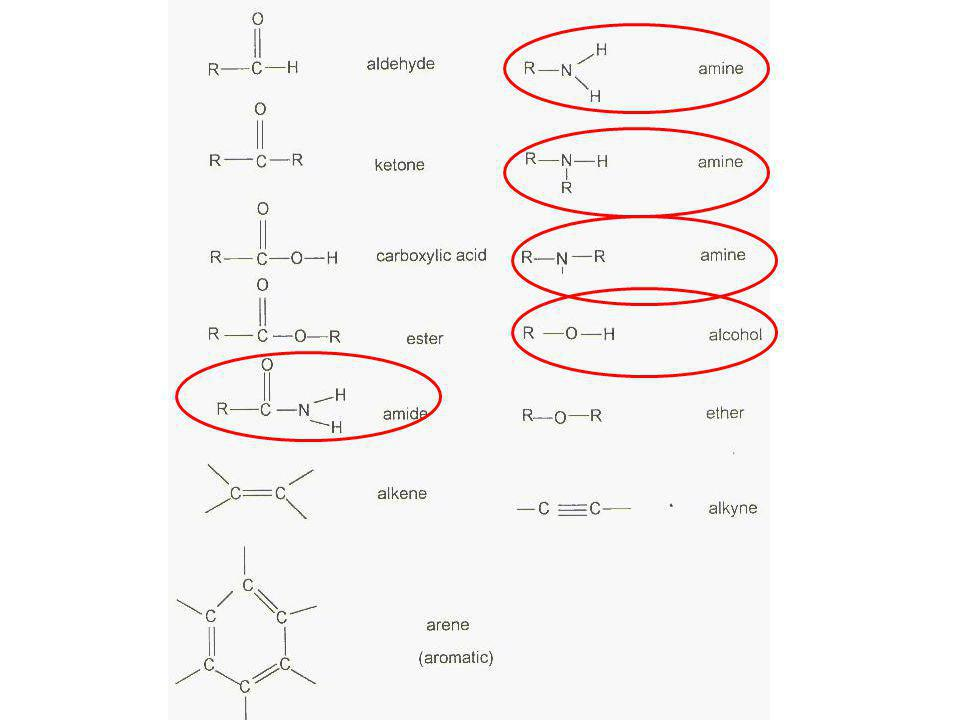 Polar Have a charge to them Molecules with a positive and negative side Non-symmetrical Amino acids: amine, alcohol, amide functional group