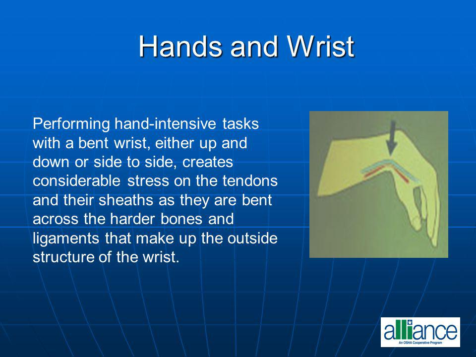 Hands and Wrist Performing hand-intensive tasks with a bent wrist, either up and down or side to side, creates considerable stress on the tendons and