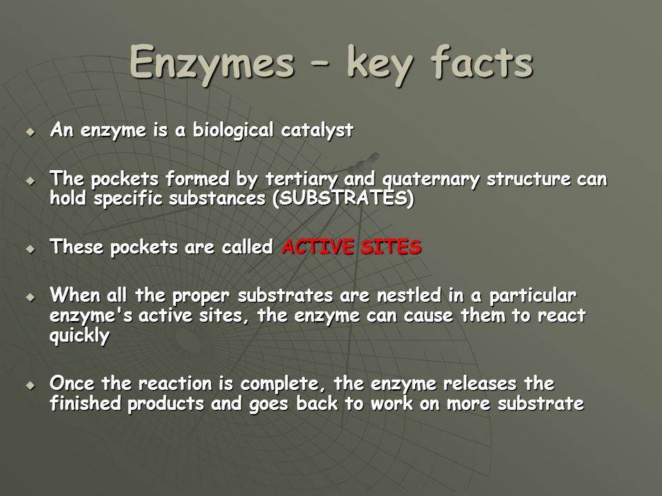 Enzymes – key facts An enzyme is a biological catalyst An enzyme is a biological catalyst The pockets formed by tertiary and quaternary structure can