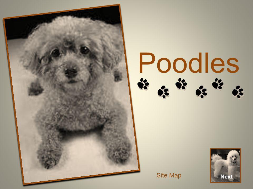 Poodles Next Site Map