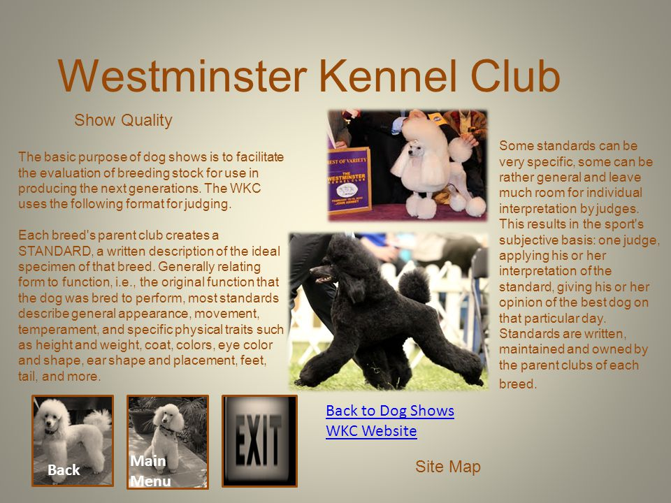 Back Main Menu Back to Dog Shows WKC Website Site Map Westminster Kennel Club Show Quality The basic purpose of dog shows is to facilitate the evaluat