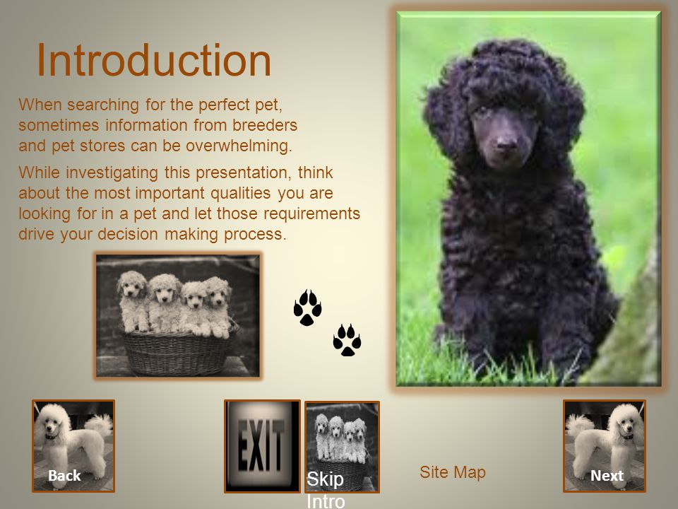 Introduction Next Back When searching for the perfect pet, sometimes information from breeders and pet stores can be overwhelming. While investigating