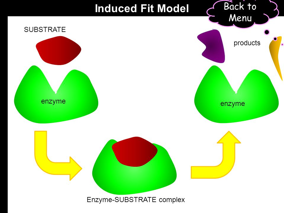 SUBSTRATE enzyme Enzyme-SUBSTRATE complex enzyme products Lock and Key Model Back to Menu