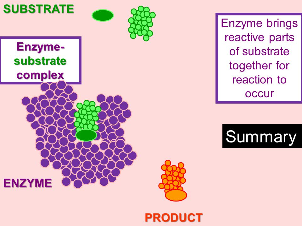 Enzyme- substrate complex ENZYMESUBSTRATEPRODUCT Enzyme brings reactive parts of substrates together for reaction to occur