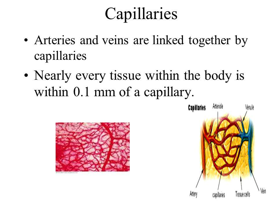 Capillaries Arteries and veins are linked together by capillaries Nearly every tissue within the body is within 0.1 mm of a capillary.