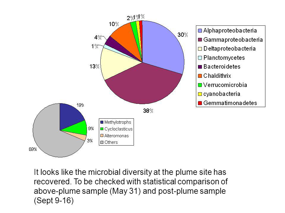 It looks like the microbial diversity at the plume site has recovered.