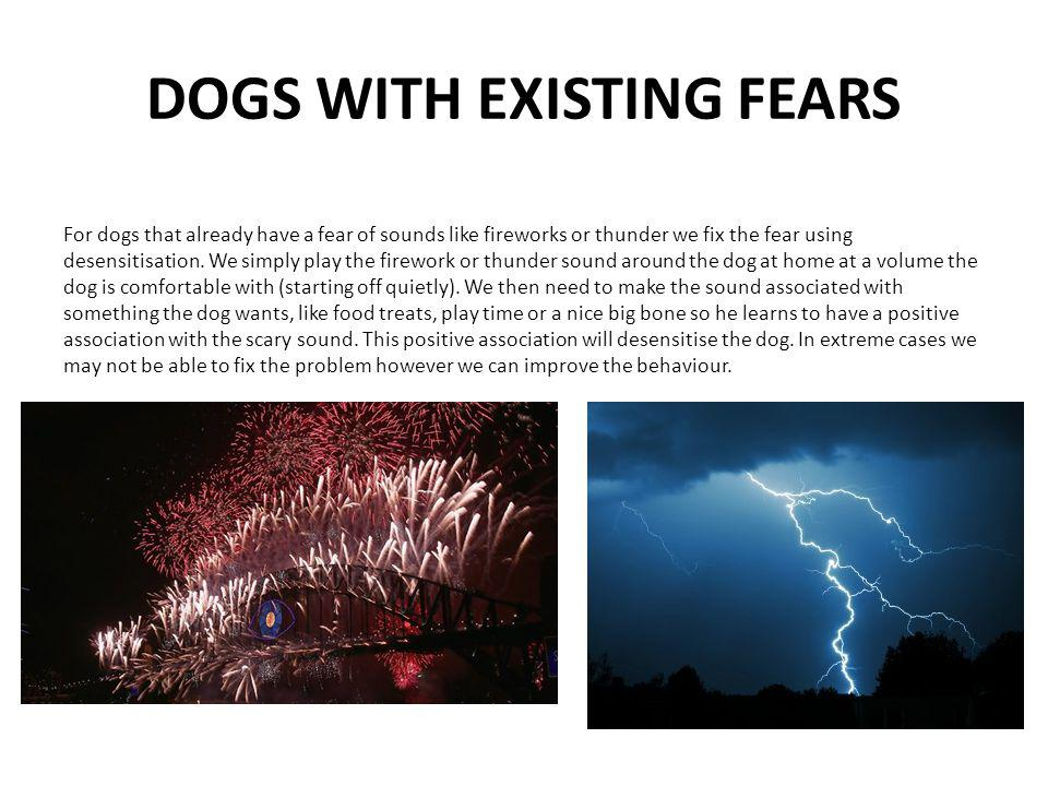 DOGS WITH EXISTING FEARS For dogs that already have a fear of sounds like fireworks or thunder we fix the fear using desensitisation.