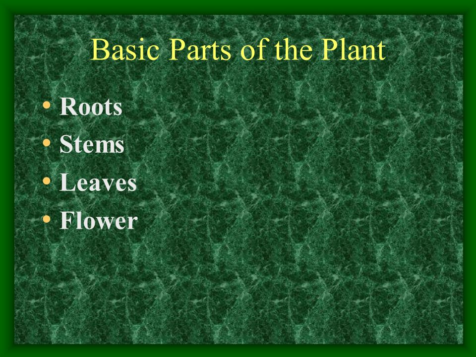 Basic Parts of the Plant Roots Stems Leaves Flower