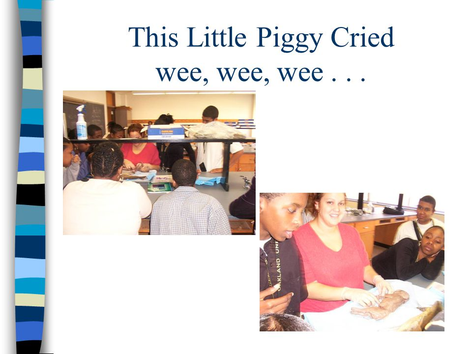 This Little Piggy Cried wee, wee, wee...
