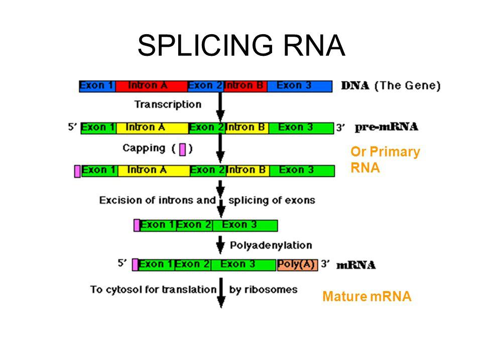 SPLICING RNA Mature mRNA Or Primary RNA
