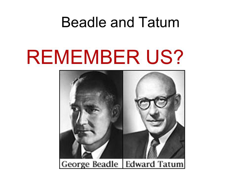 Beadle and Tatum REMEMBER US?