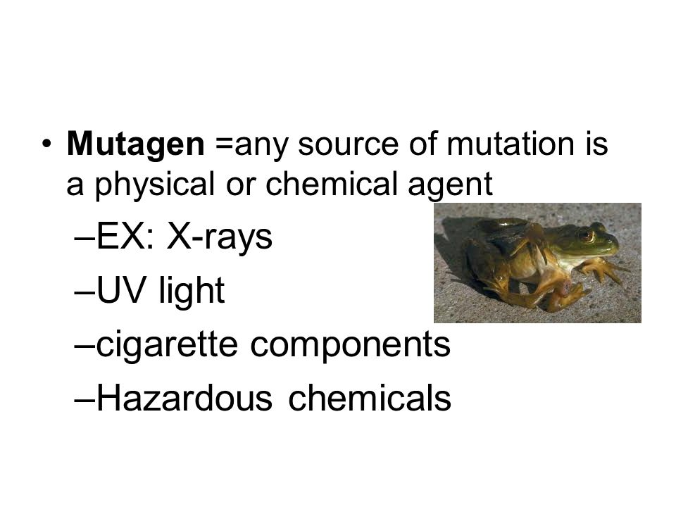 Mutagen =any source of mutation is a physical or chemical agent –EX: X-rays –UV light –cigarette components –Hazardous chemicals