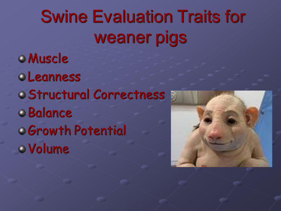 Swine Evaluation Traits for weaner pigs Swine Evaluation Traits for weaner pigs Muscle Leanness Structural Correctness Balance Growth Potential Volume