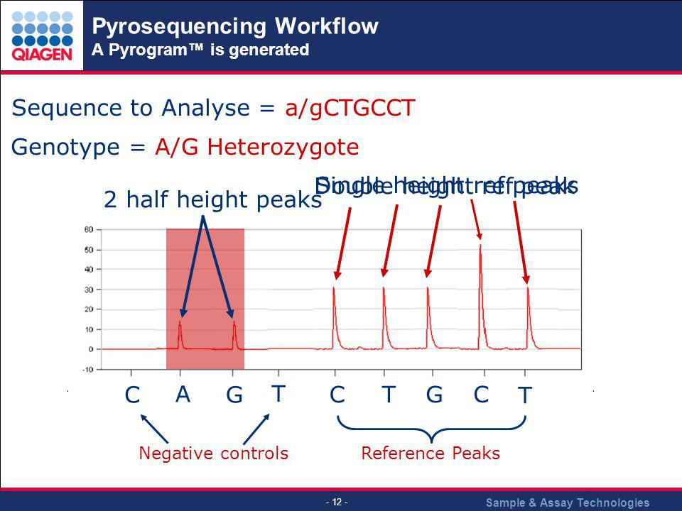 Sample & Assay Technologies - 12 - Sequence to Analyse = a/gCTGCCT Genotype = A/G Heterozygote C T CGT T C A G Negative controls Reference Peaks Singl