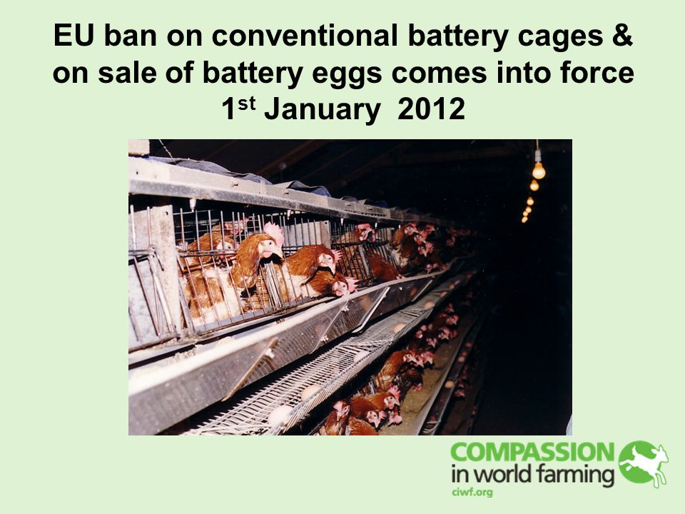EU ban on conventional battery cages & on sale of battery eggs comes into force 1 st January 2012