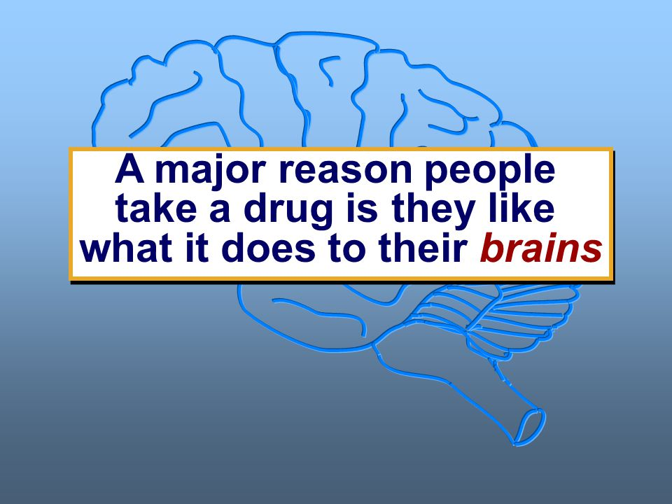 A major reason people take a drug is they like what it does to their brains A major reason people take a drug is they like what it does to their brains