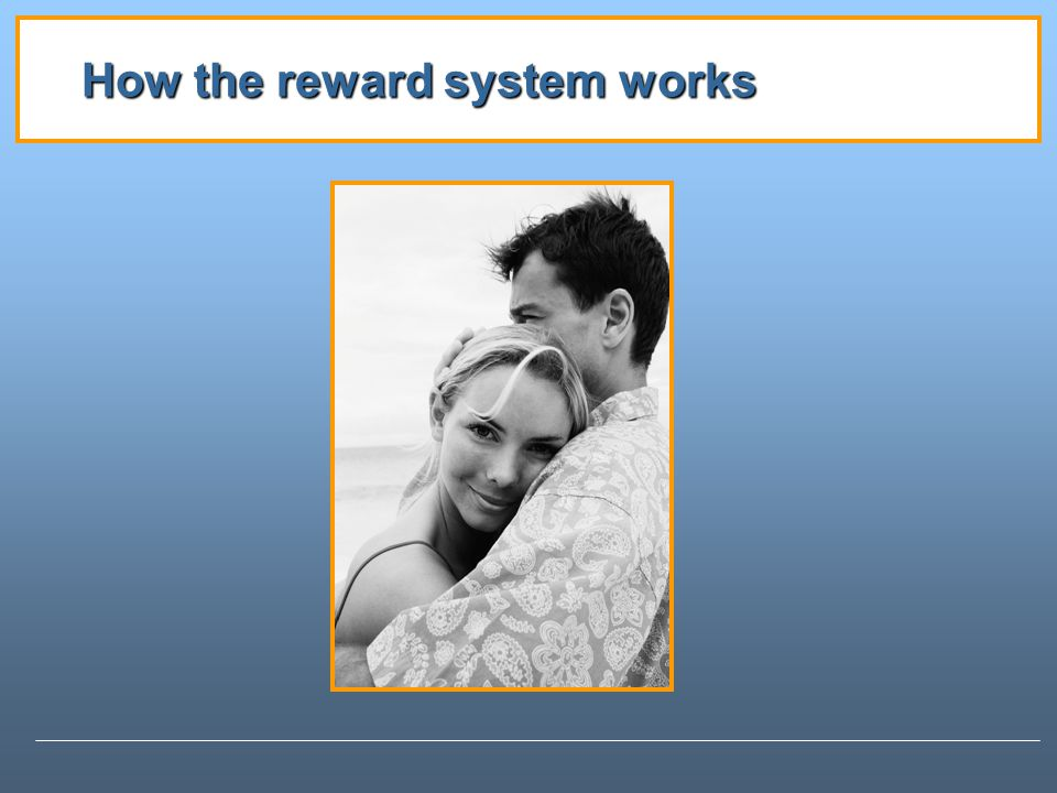 How the reward system works