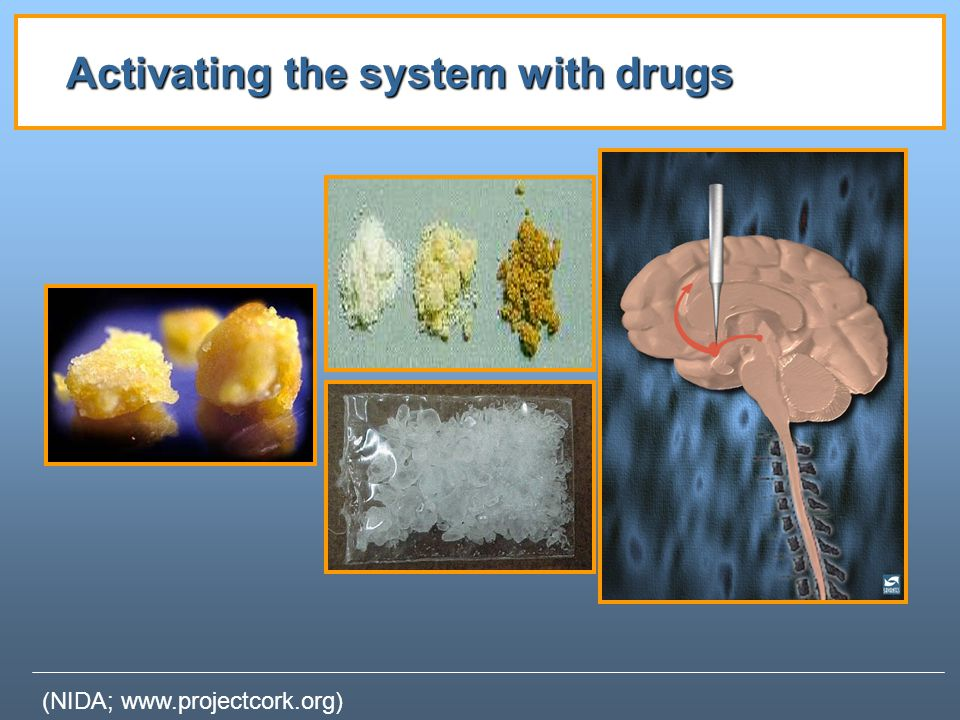 Activating the system with drugs (NIDA; www.projectcork.org)