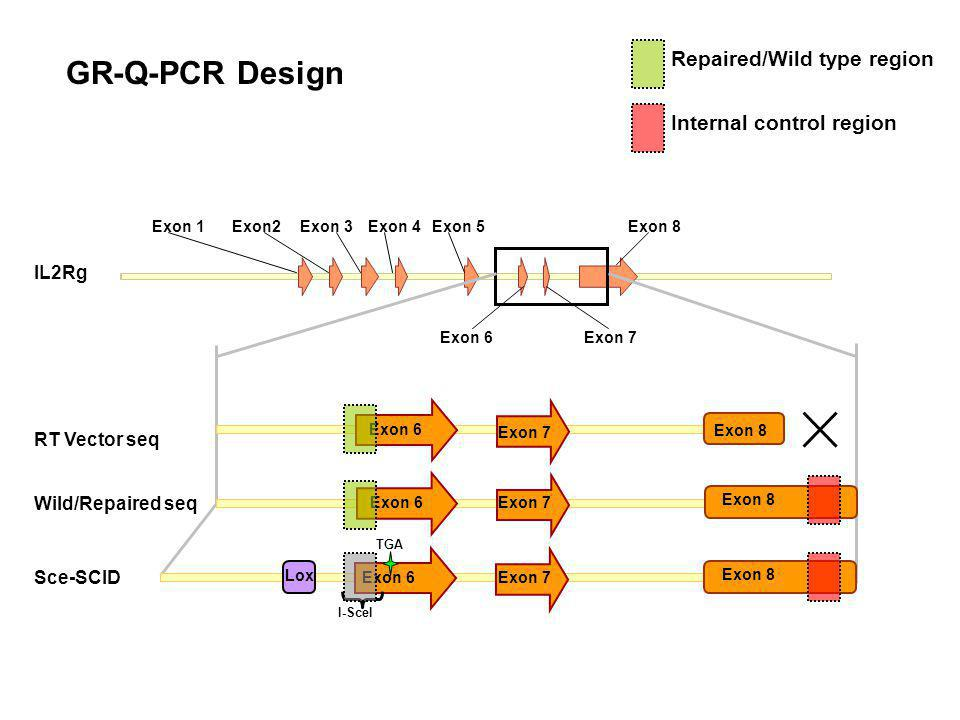 GR-Q-PCR Design Exon 1Exon2Exon 3Exon 4Exon 5 Exon 6Exon 7 Exon 8 Exon 6 RT Vector seq Exon 7 Exon 8 Exon 6 Wild/Repaired seq Exon 7 Exon 8 Lox TGA Exon 6 I-SceI Sce-SCID Exon 7 Exon 8 Repaired/Wild type region Internal control region IL2Rg