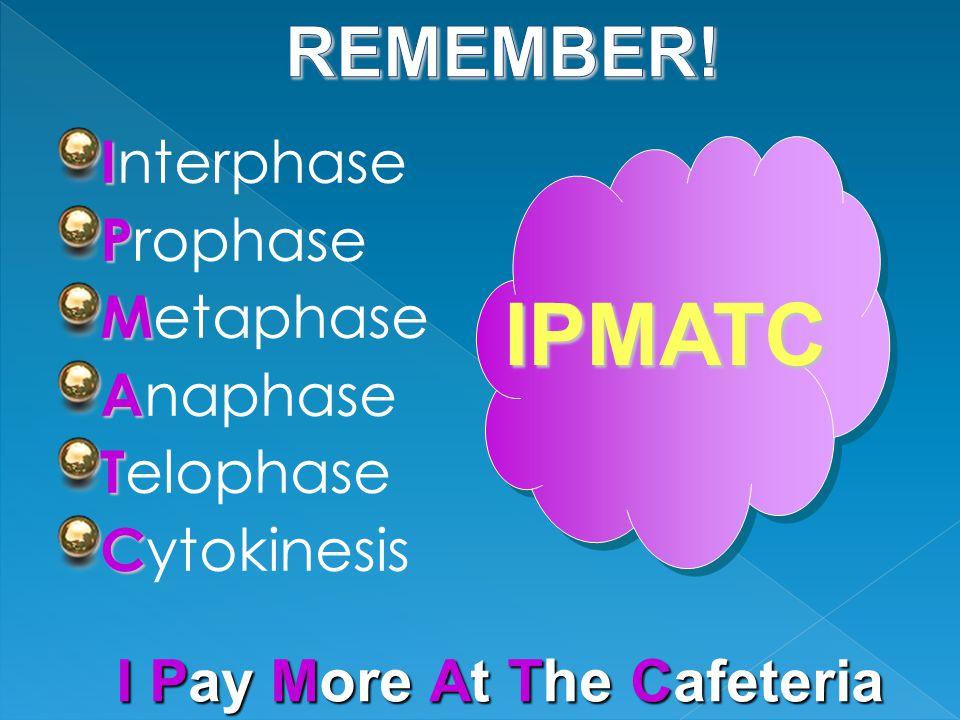 I I nterphase P P rophase M M etaphase A A naphase T T elophase C C ytokinesis IPMATC I Pay M ore At T he Cafeteria