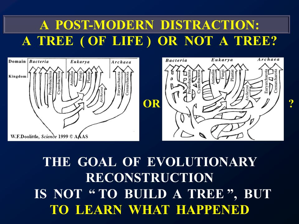 A POST-MODERN DISTRACTION: A TREE ( OF LIFE ) OR NOT A TREE.