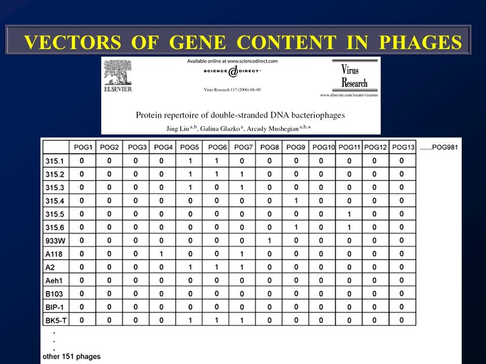 VECTORS OF GENE CONTENT IN PHAGES