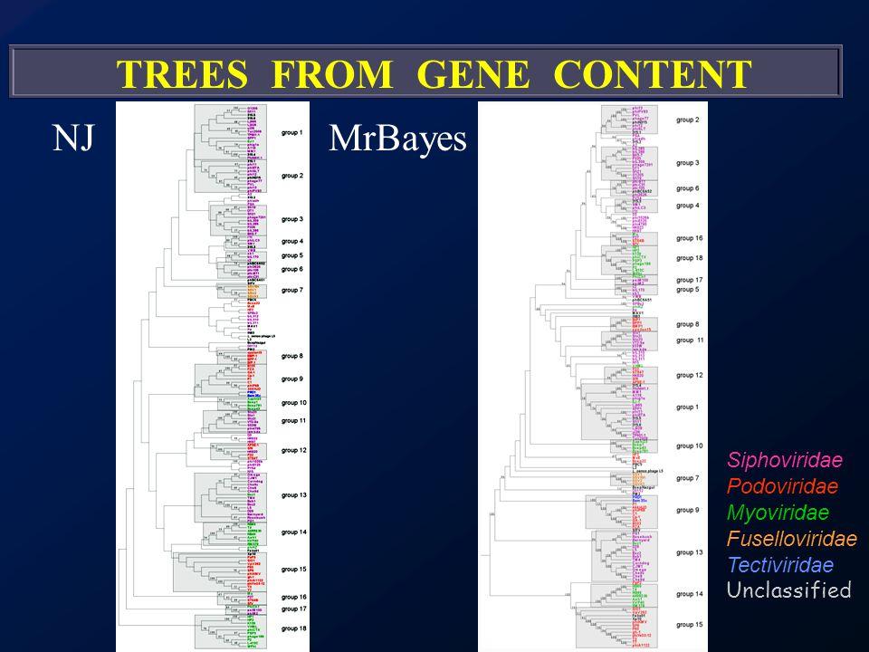 NJMrBayes Siphoviridae Podoviridae Myoviridae Fuselloviridae Tectiviridae Unclassified TREES FROM GENE CONTENT