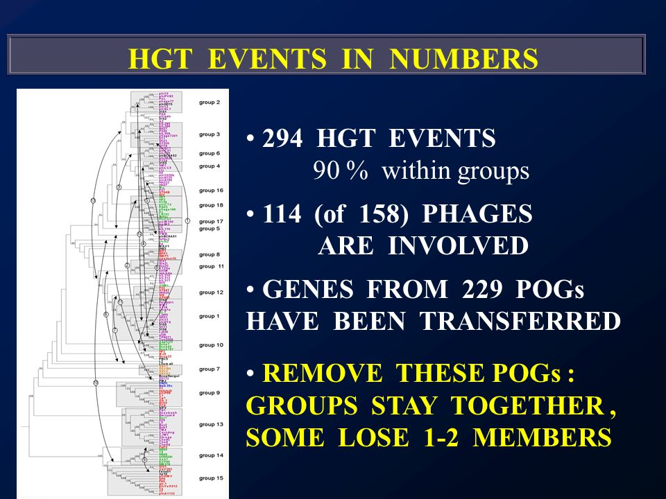 HGT EVENTS IN NUMBERS 294 HGT EVENTS 90 % within groups 114 (of 158) PHAGES ARE INVOLVED GENES FROM 229 POGs HAVE BEEN TRANSFERRED REMOVE THESE POGs : GROUPS STAY TOGETHER, SOME LOSE 1-2 MEMBERS