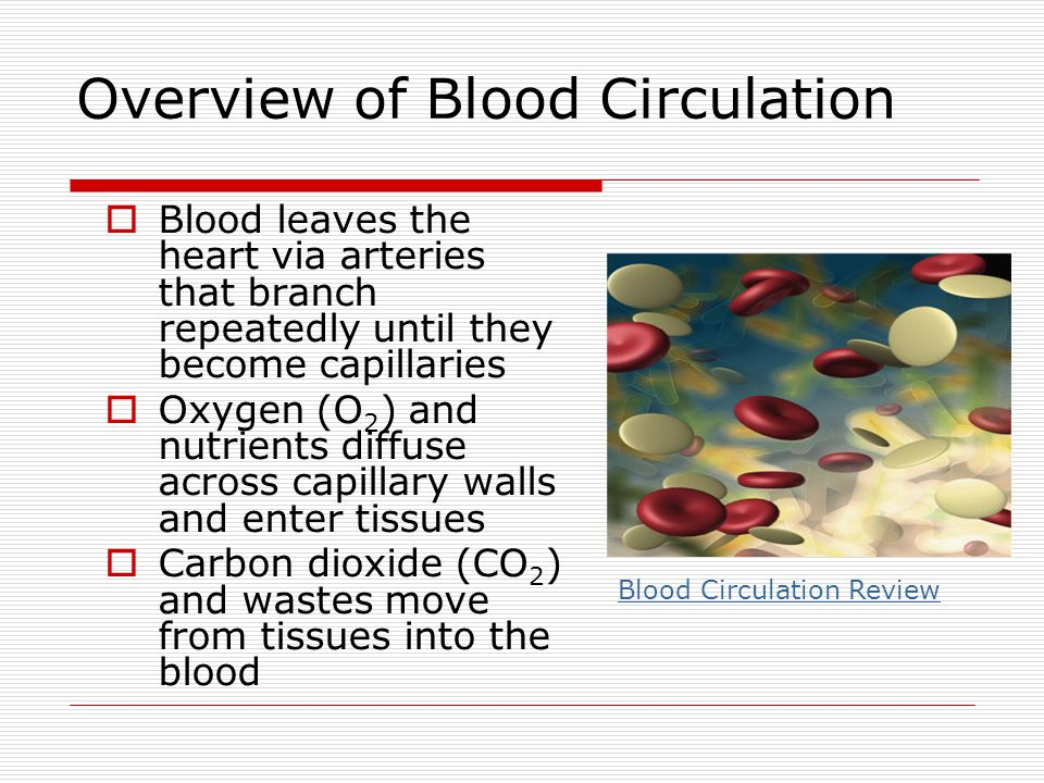 Overview of Blood Circulation Blood leaves the heart via arteries that branch repeatedly until they become capillaries Oxygen (O 2 ) and nutrients dif