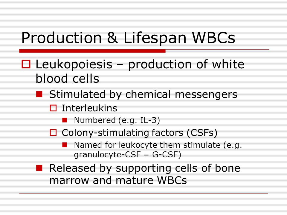 Production & Lifespan WBCs Leukopoiesis – production of white blood cells Stimulated by chemical messengers Interleukins Numbered (e.g. IL-3) Colony-s
