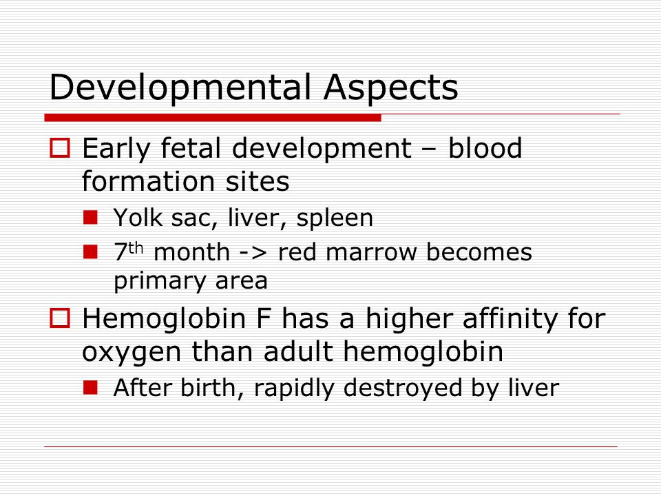 Developmental Aspects Early fetal development – blood formation sites Yolk sac, liver, spleen 7 th month -> red marrow becomes primary area Hemoglobin