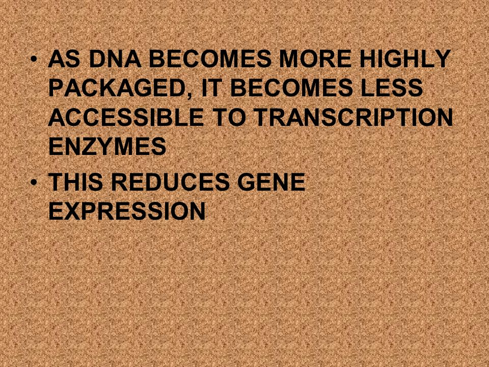 AS DNA BECOMES MORE HIGHLY PACKAGED, IT BECOMES LESS ACCESSIBLE TO TRANSCRIPTION ENZYMES THIS REDUCES GENE EXPRESSION