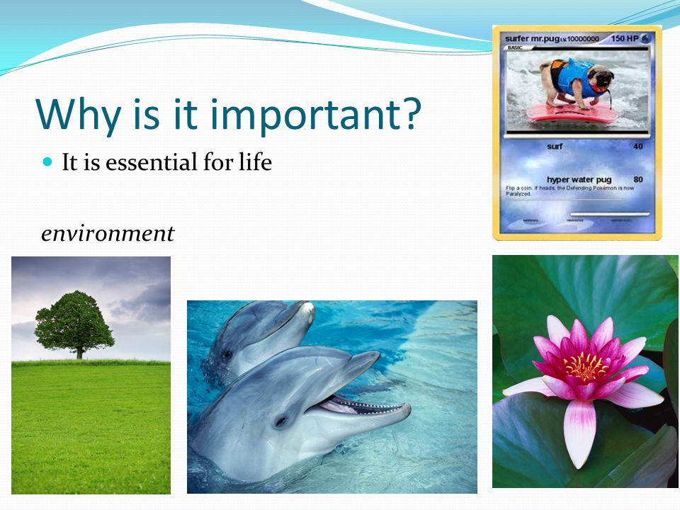 Why is it important It is essential for life environment