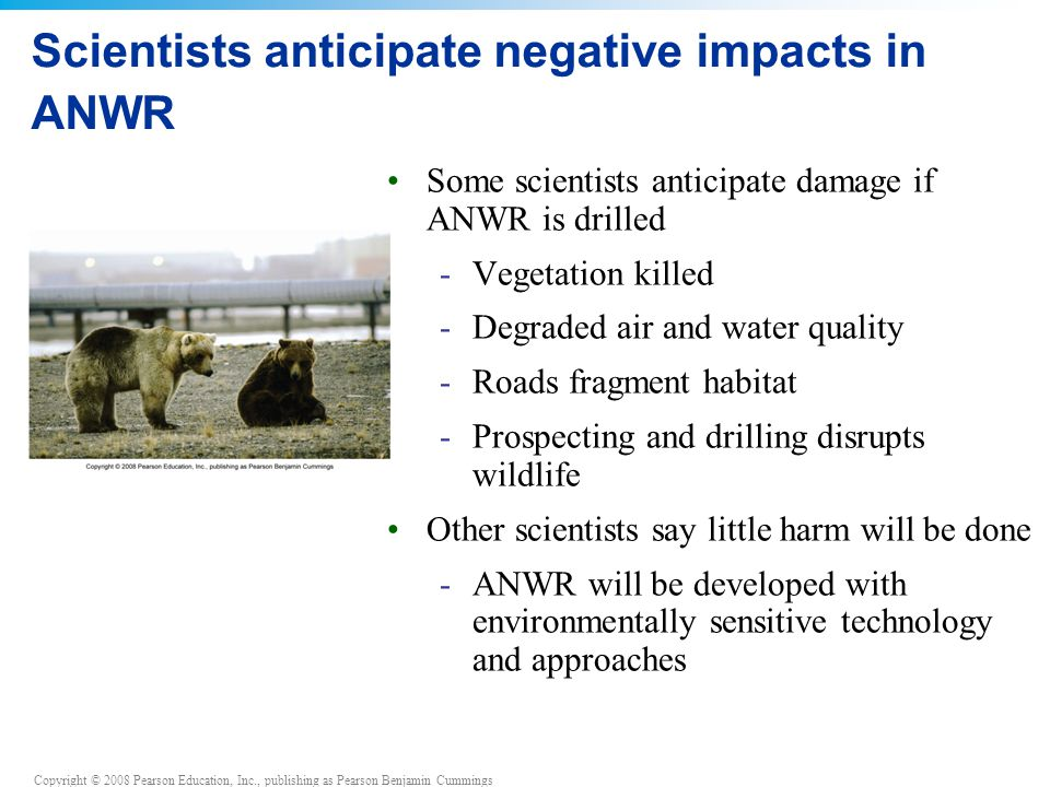 Copyright © 2008 Pearson Education, Inc., publishing as Pearson Benjamin Cummings Scientists anticipate negative impacts in ANWR Some scientists antic