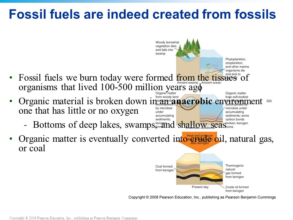 Copyright © 2008 Pearson Education, Inc., publishing as Pearson Benjamin Cummings Fossil fuels are indeed created from fossils Fossil fuels we burn to