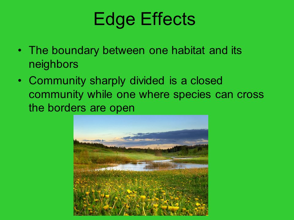 Edge Effects The boundary between one habitat and its neighbors Community sharply divided is a closed community while one where species can cross the