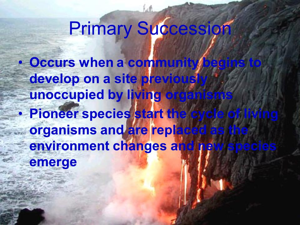 Primary Succession Occurs when a community begins to develop on a site previously unoccupied by living organisms Pioneer species start the cycle of li