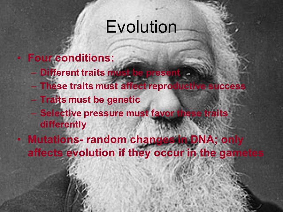 Evolution Four conditions: –Different traits must be present –These traits must affect reproductive success –Traits must be genetic –Selective pressur