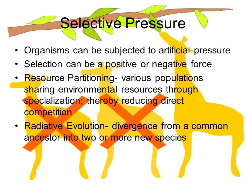 Selective Pressure Organisms can be subjected to artificial pressure Selection can be a positive or negative force Resource Partitioning- various popu