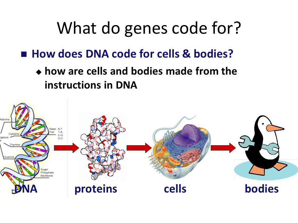 2007-2008 From Gene to Protein How Genes Work