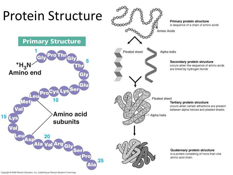 What do genes code for.proteinscellsbodies How does DNA code for cells & bodies.