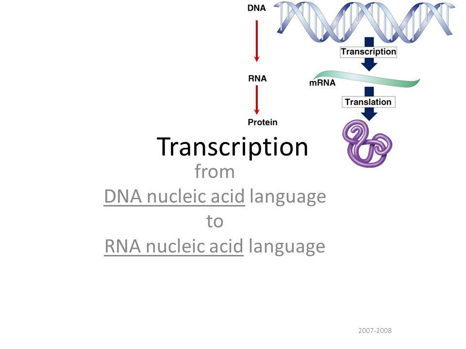 mRNA From gene to protein DNA transcription nucleuscytoplasm a a a a a a a a a aa protein translation ribosome trait