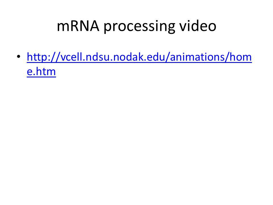 A A A A A 3 poly-A tail mRNA 5 5 cap 3 G P P P 50-250 As More post-transcriptional processing Need to protect mRNA on its trip from nucleus to cytoplasm – enzymes in cytoplasm attack mRNA protect the ends of the molecule add 5 GTP cap add poly-A tail – longer tail, mRNA lasts longer: produces more protein