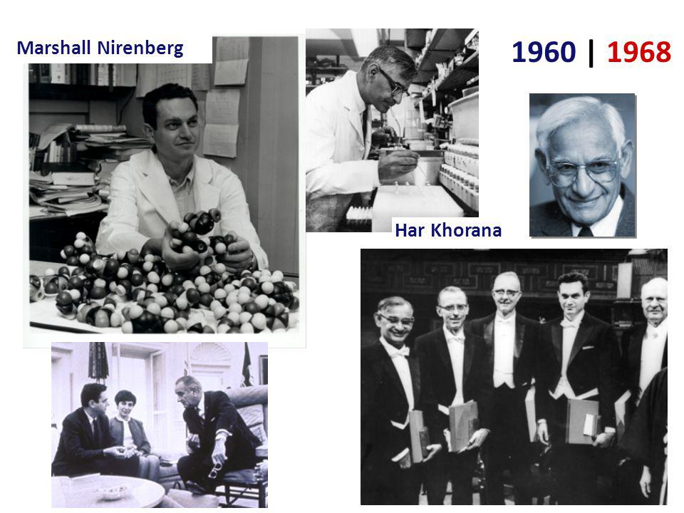 Cracking the code 1960 | 1968 Crick – determined 3-letter (triplet) codon system Nirenberg & Khorana WHYDIDTHEREDBATEATTHEFATRAT Nirenberg (47) & Khorana (17) determined mRNA–amino acid match added fabricated mRNA to test tube of ribosomes, tRNA & amino acids created artificial UUUUU… mRNA found that UUU coded for phenylalanine
