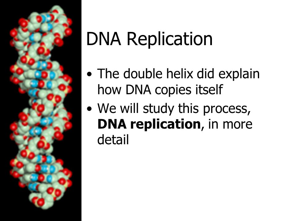 DNA Replication The double helix did explain how DNA copies itself We will study this process, DNA replication, in more detail