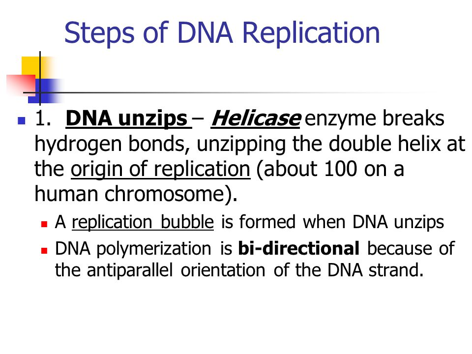 Steps of DNA Replication 1. DNA unzips – Helicase enzyme breaks hydrogen bonds, unzipping the double helix at the origin of replication (about 100 on